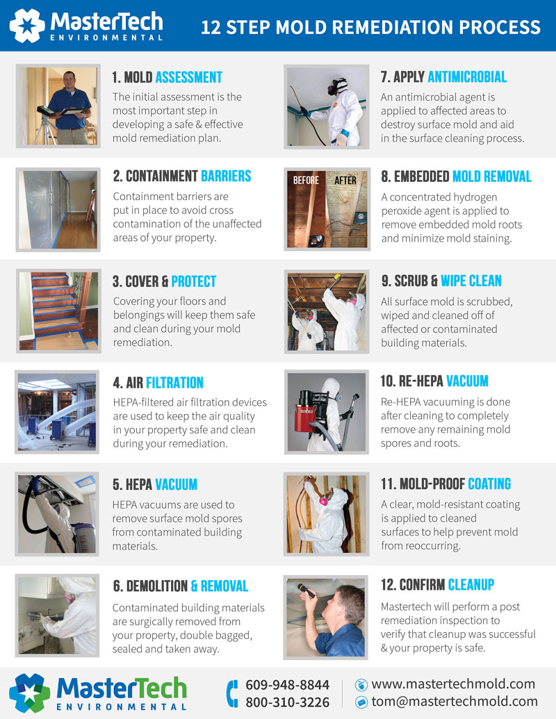 mold-removal-process-voorhees-nj