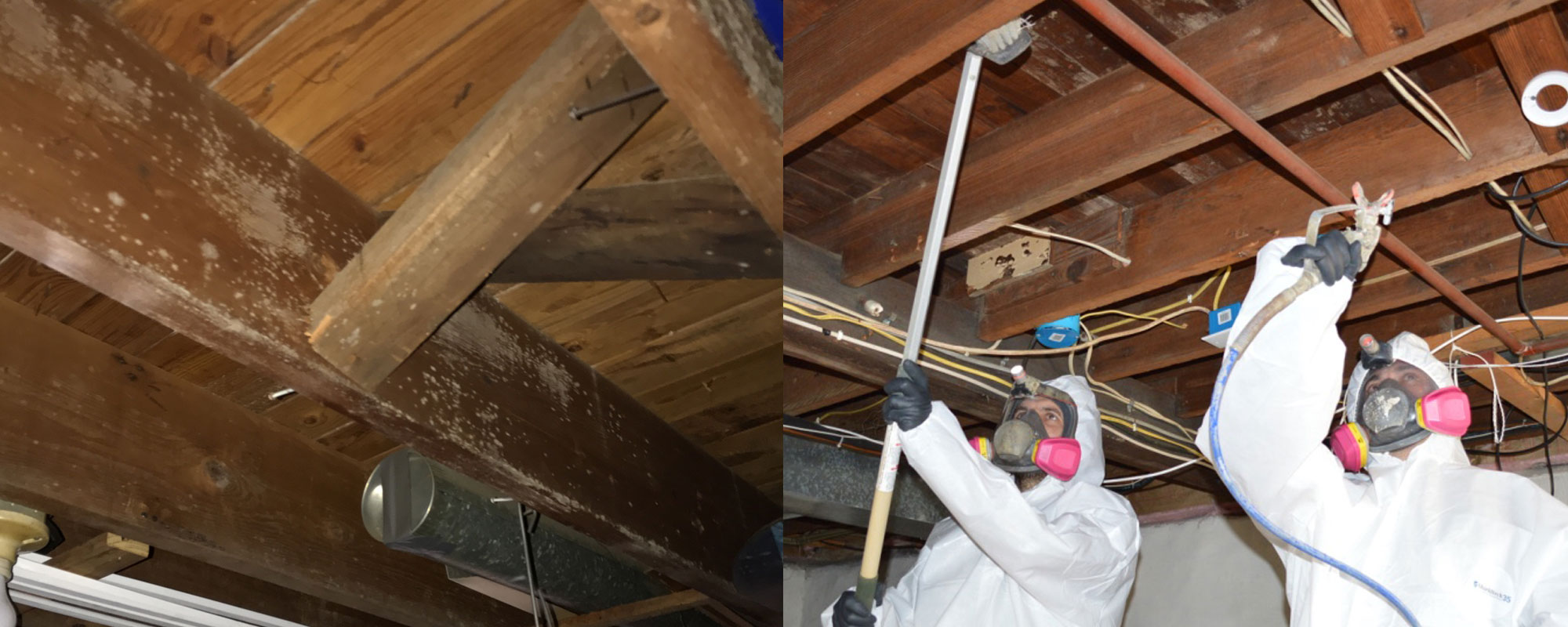 Basement-Mold-Removal-NJ