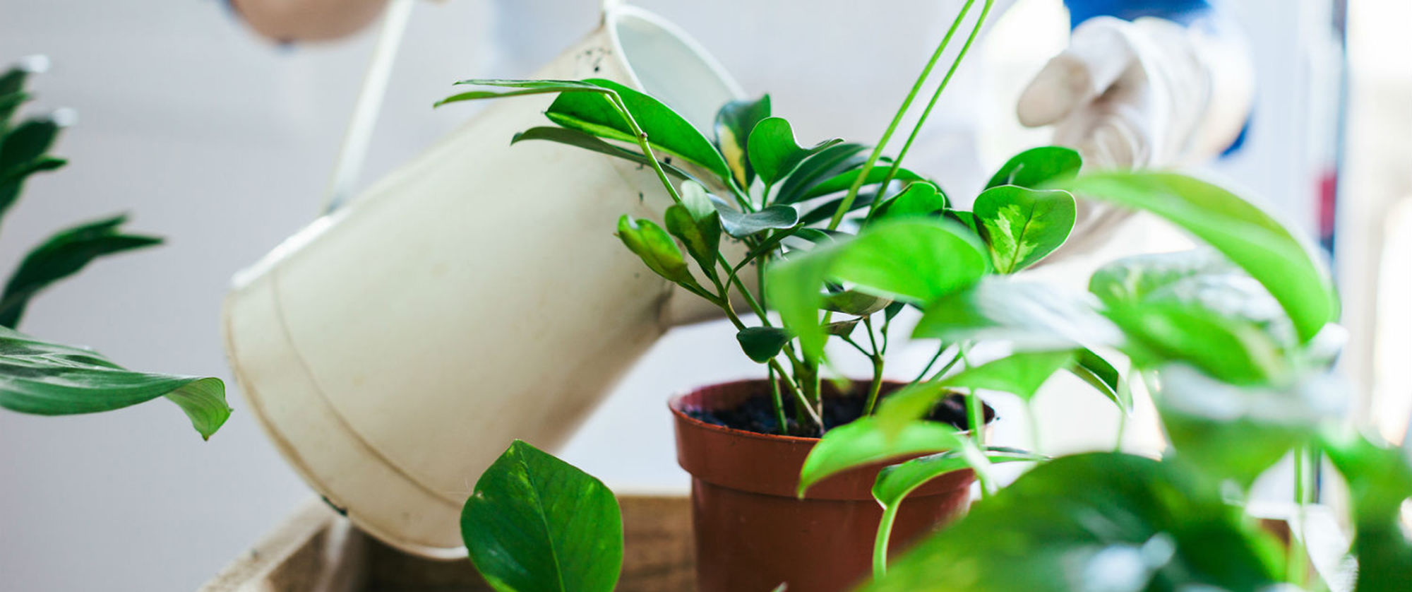 prevent-houseplant-mold