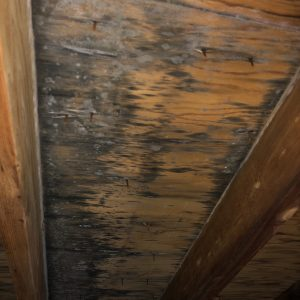 snow-on-roof-causes-attic-mold