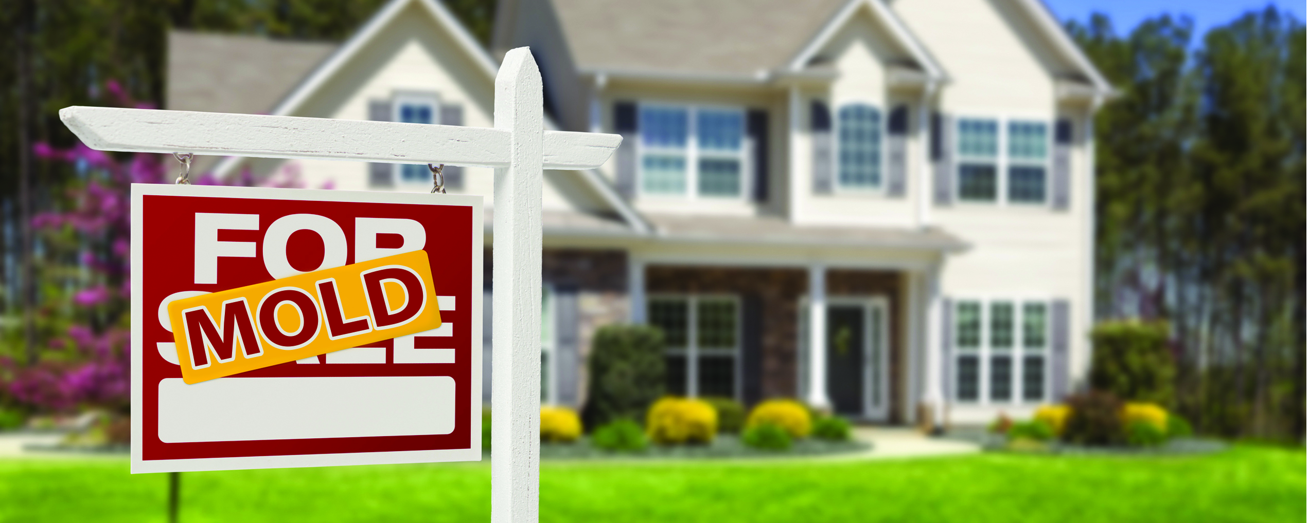 Home Inspector Found Mold NJ Real Estate