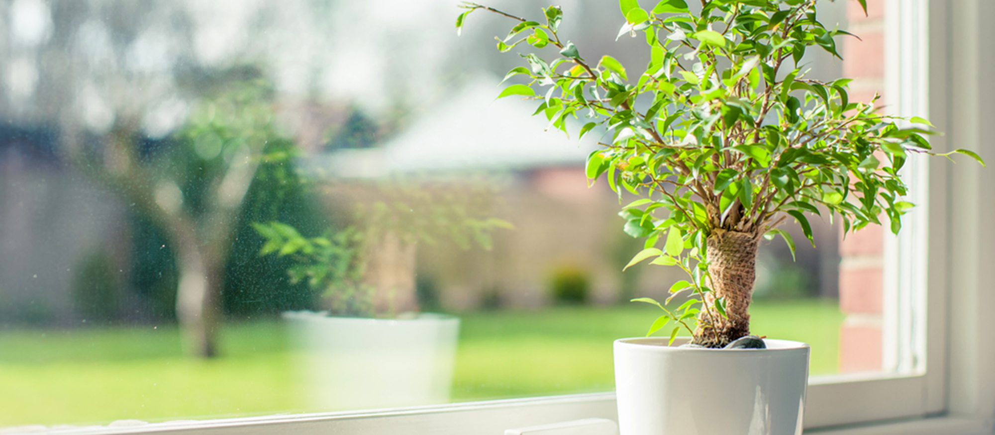 Remove Mold from Houseplants