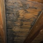 roof leaks cause attic mold