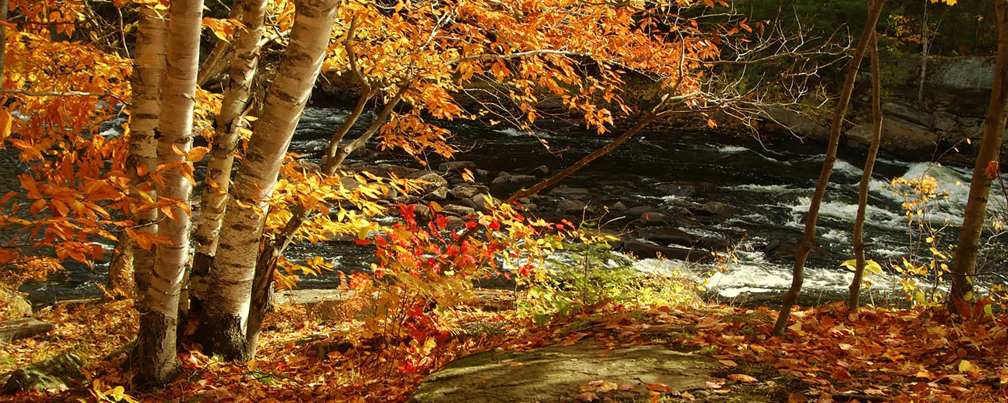 fall leaves and mold allergies