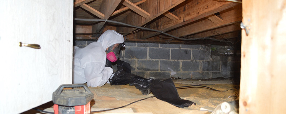 crawl space Mold Remediation in Quakertown, PA, 18951, Bucks County (3295)