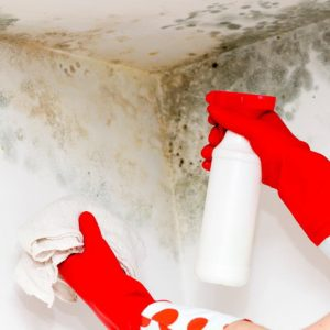 never use bleach to clean mold on a porous building material