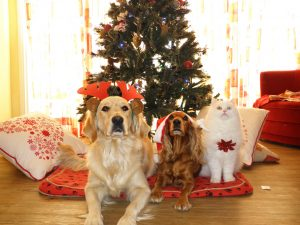 pets can trigger holiday allergies