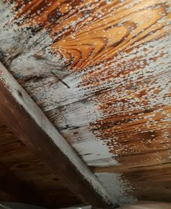mold caused by frozen attic