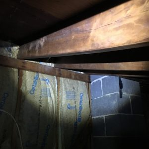 mold removal from floor joists