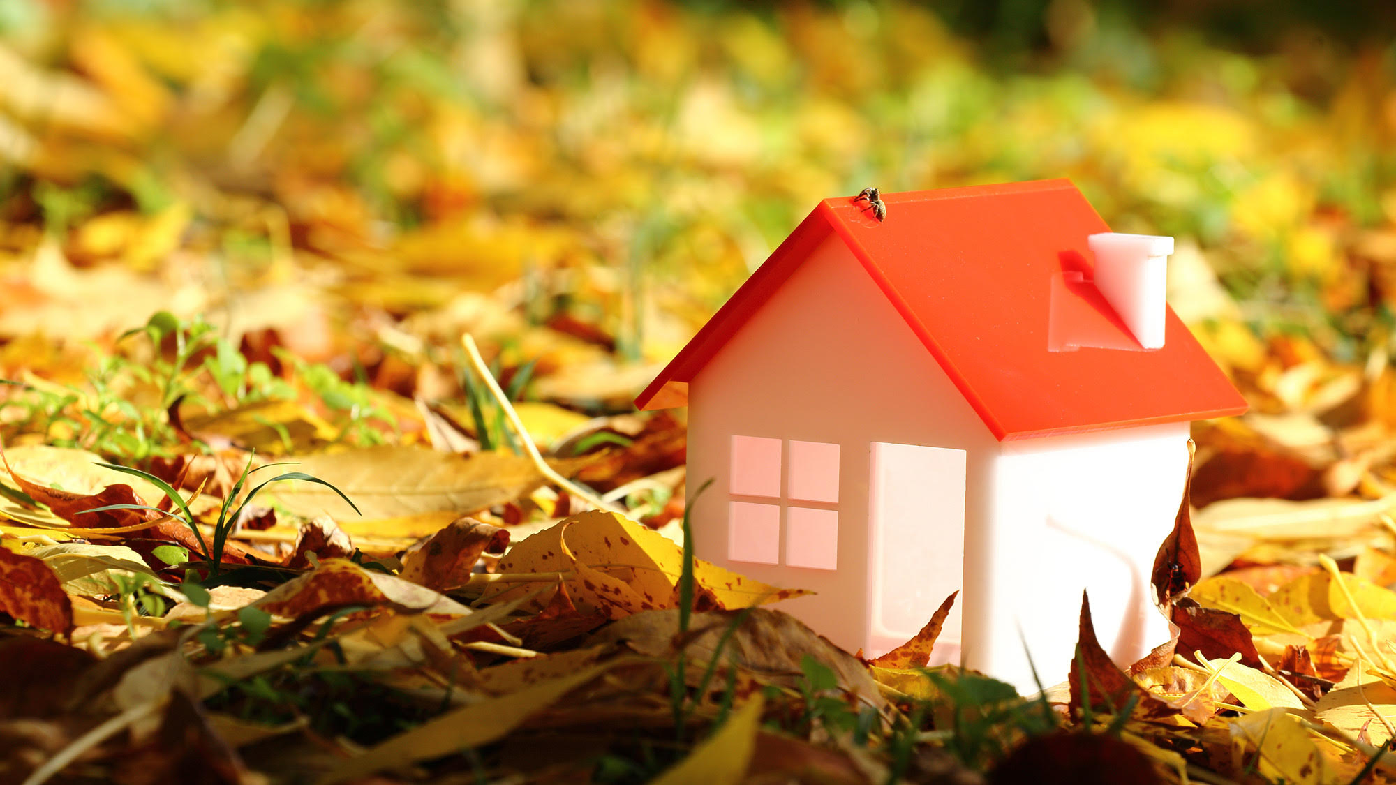 seasonal home maintenance during fall