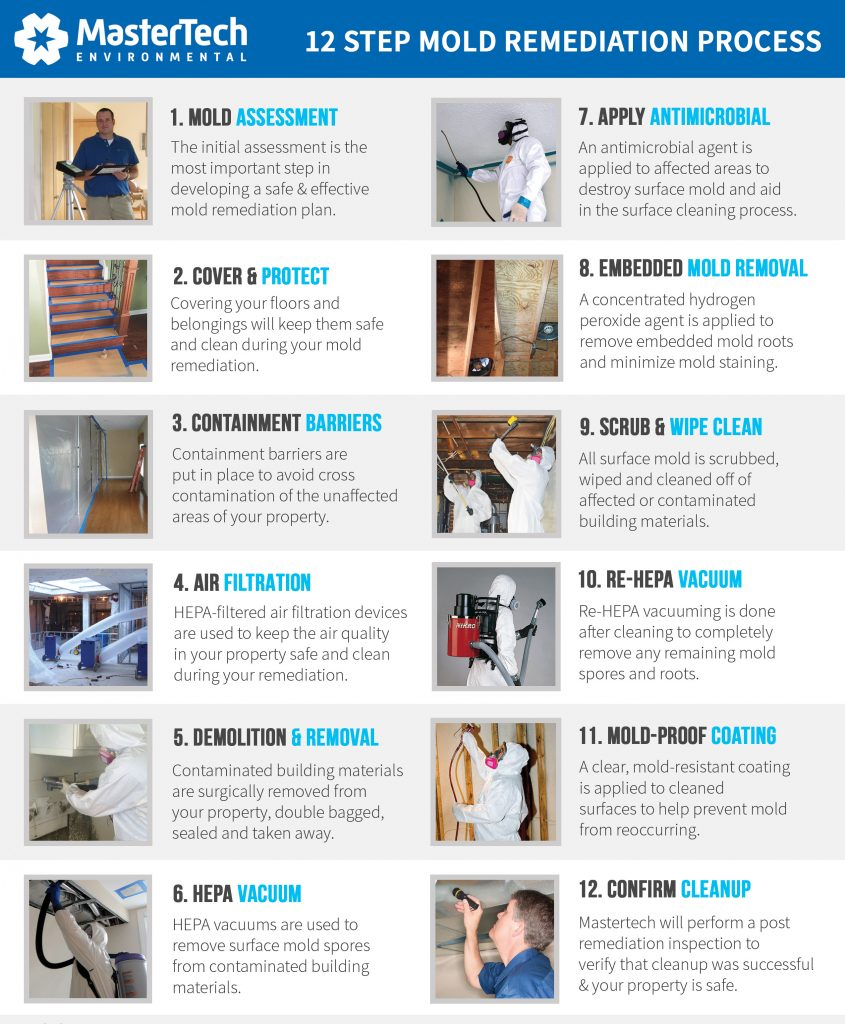 Professional Mold Removal South Jersey